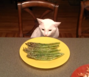 A hungry cat will eat almost anything. Don't think you're so special.